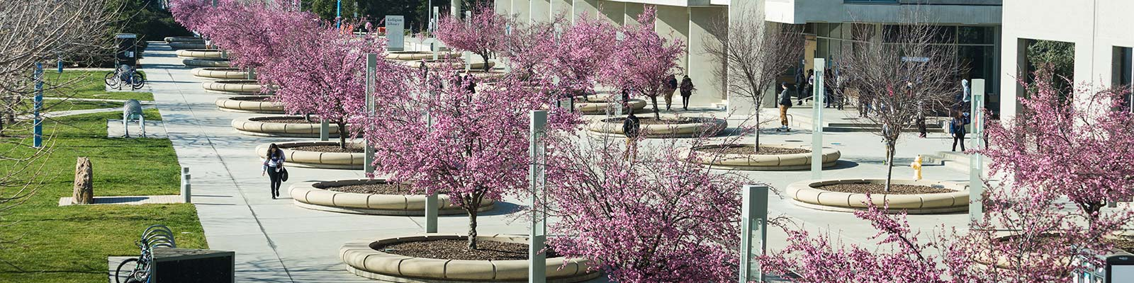 uc merced campus in the fall with cherry blossoms
